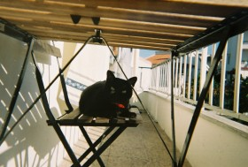 Lomo Cat